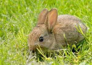 1034013_baby_rabbit_11
