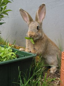 1143399_young_rabbit