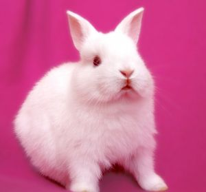 1195681_bunny_on_pink_series