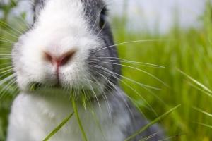 1282544_rabbit_1
