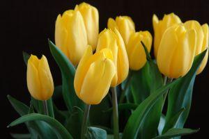 kvetina-2